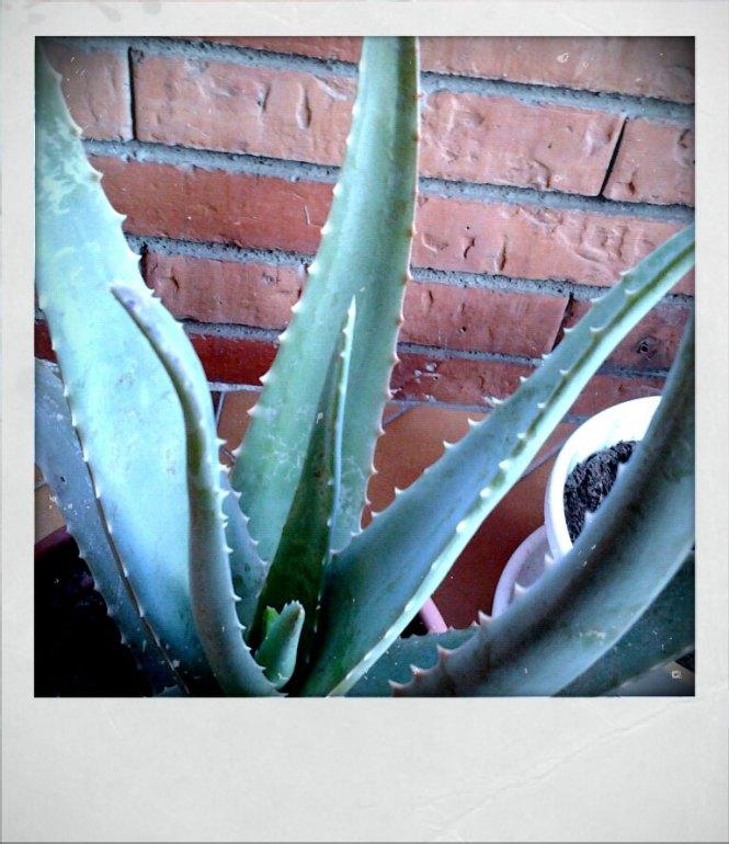 Fractal Aloe