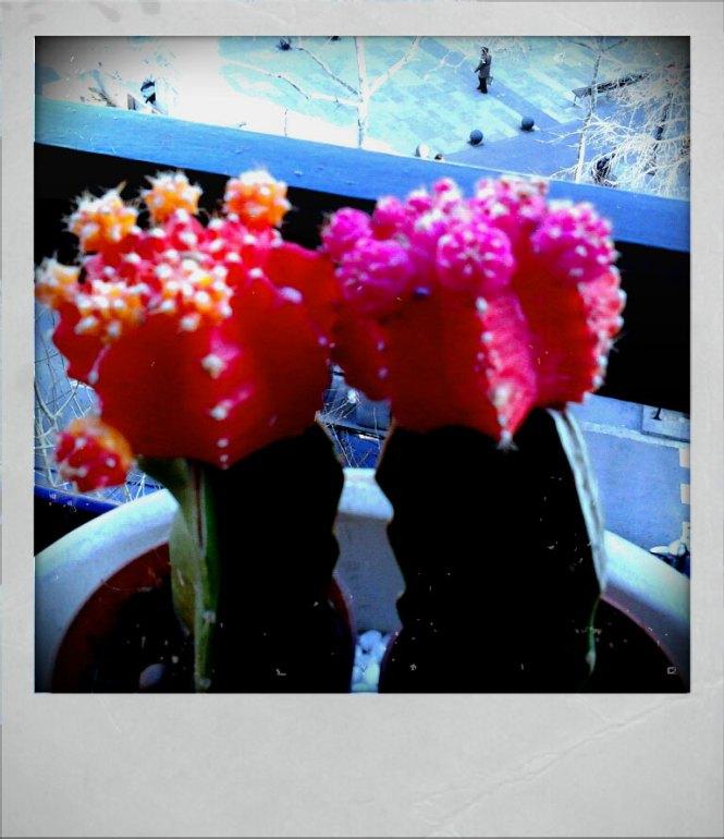 Fractal Cactus