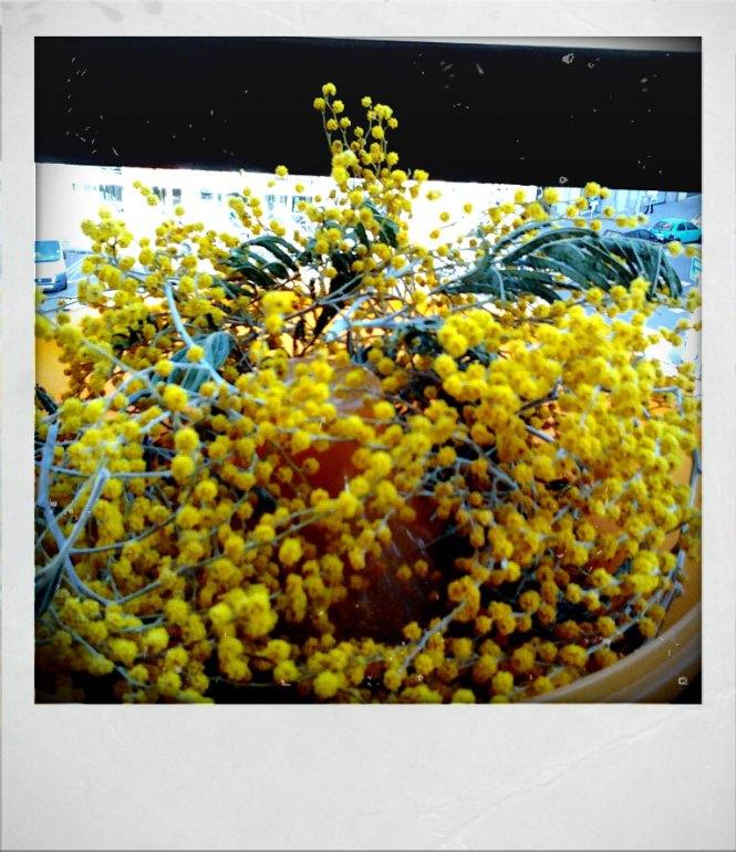 Fractal Mimosa