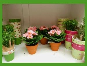Plant Spring Display