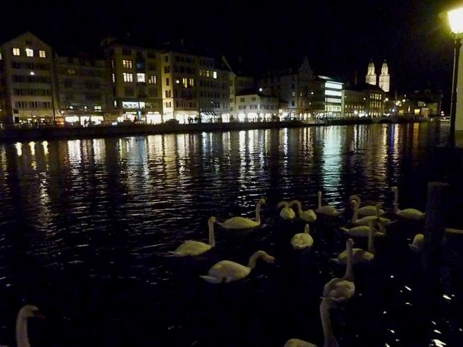 Swans Zurich