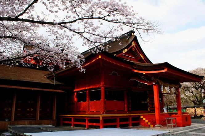 sakura in japan fujinomiya
