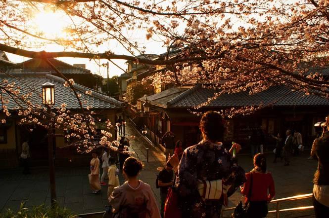 sakura in japan kyoto sunset
