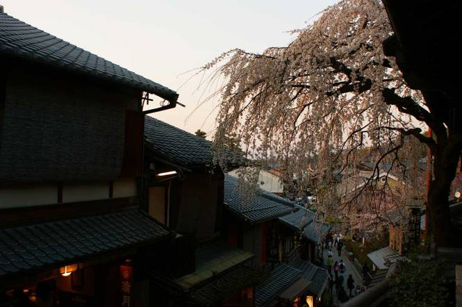 sakura in japan kyoto temple