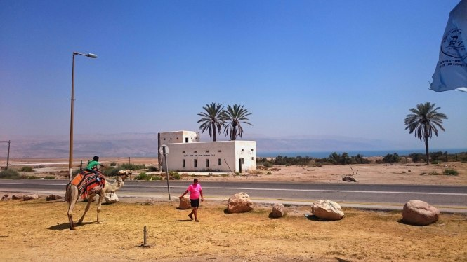 Israel-camel-palmtrees
