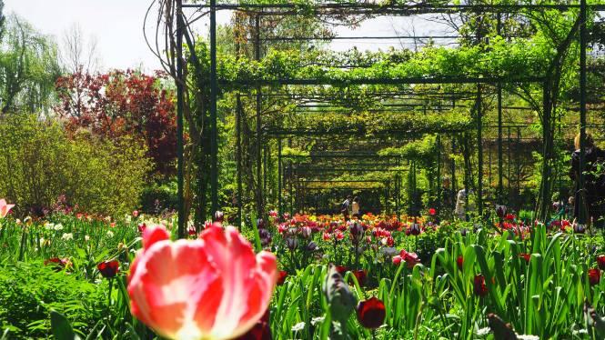 giverny jardin monet pink flowers